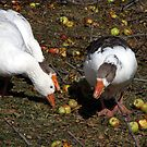 Geese and Apples by Jan  Tribe