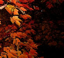 Angry Acer by Dennis Smoyer