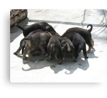 Puppies Eating Canvas Print