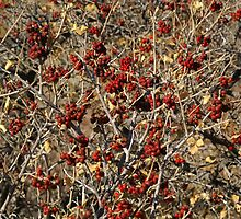Berries Red by Bob Spath