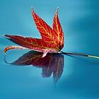 Autumn 2011 by bkphoto