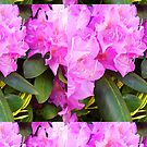Lavender Rhododendron 2 by Kevin J Cooper