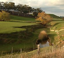 Green Pasture,Daylesford District by Joe Mortelliti