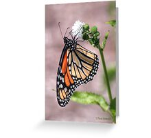 Monarch Butterfly HDR Greeting Card