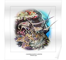 CARIBBEAN SPINY LOBSTER 5 Poster