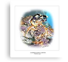 CARIBBEAN SPINY LOBSTER 6 Canvas Print