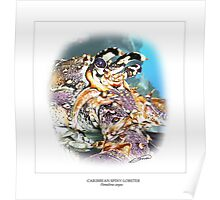 CARIBBEAN SPINY LOBSTER 6 Poster