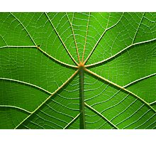 leaf land Photographic Print