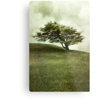 Lone Cypress Metal Print