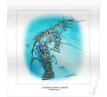 CARIBBEAN SPINY LOBSTER 8 Poster