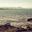 Waterscape: Windang Island Panorama by Vanessa Pike-Russell