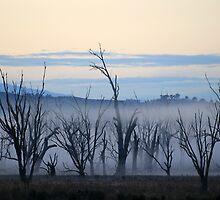 Lake Mokoan at dawn by Bellarine