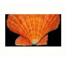 Orange Scallop  Art Print