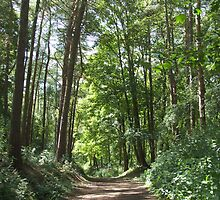 Woodland Walk by emele