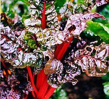 Rhubarb by woodlandninja