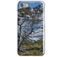 Taylor Head Trees iPhone Case/Skin