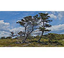 Taylor Head Trees Photographic Print