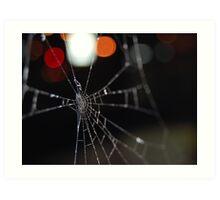 macro spider web Art Print