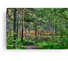 Forest Walk in the New Forest, Hampshire, England Canvas Print