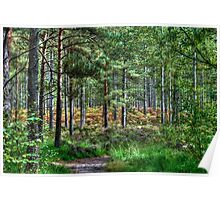 Forest Walk in the New Forest, Hampshire, England Poster