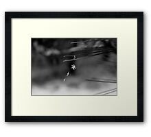 Delicate and Dangling Dangerously Framed Print