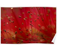 Bottle brush stamens Poster