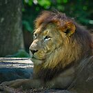 King of the Zoo by Adri  Padmos