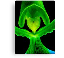Lover Boy - A new perspective on Orchid Life Canvas Print