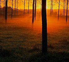 Sunrise through trees by peteton