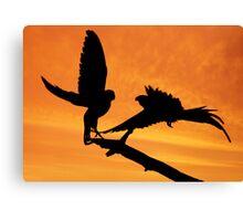 Parakeets at sunset Canvas Print