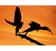 Parakeets at sunset Photographic Print