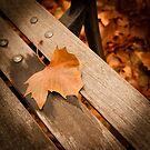 Leaf on Bench by Carlos Restrepo
