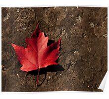 Maple Leaf on Granite Poster