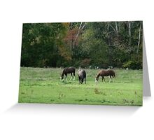 Quietly Grazing Greeting Card