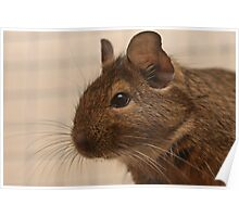 Our new Degus Poster