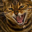 Hear Me Roar by Jan Cartwright