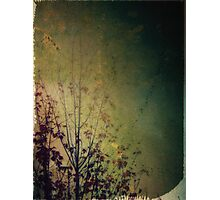 Lingering reverie Photographic Print
