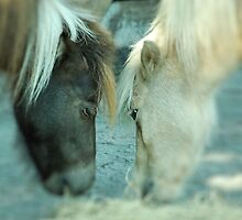 seeing eye to eye by Aavirett