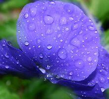 Tears of blue by tanmari