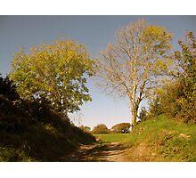 Rural Irish country path Photographic Print