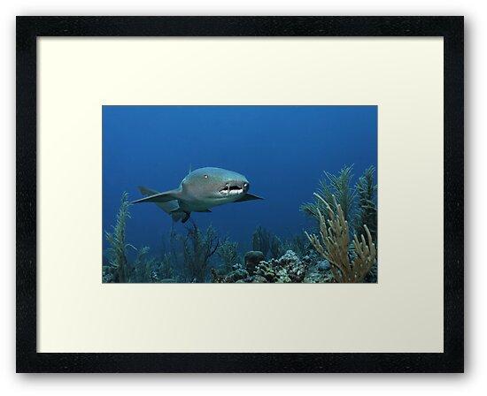 Reef Cruiser by Norbert Probst