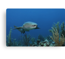 Reef Cruiser Canvas Print