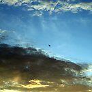 Who's Plane is It? by Vivek Bakshi