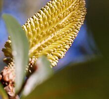 yellow bottle brush by BeckRocchi