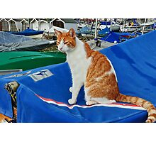 Harbour Kitty Photographic Print