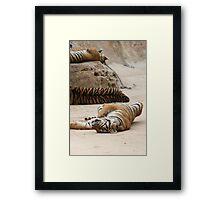 Tiger Lie Framed Print