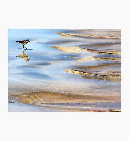 Marine Birdie Photographic Print