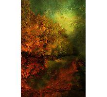Fall Road To Renewal Photographic Print