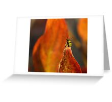 Don't bug me Greeting Card