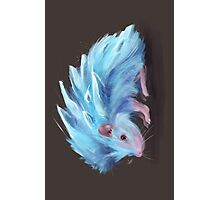 Ice Hedgehog Photographic Print